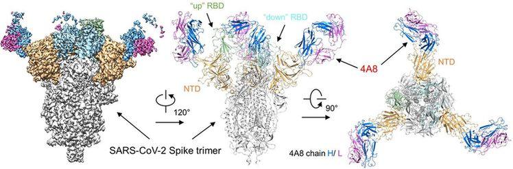 Chinese team makes breakthrough in coronavirus antibody research-cnTechPost
